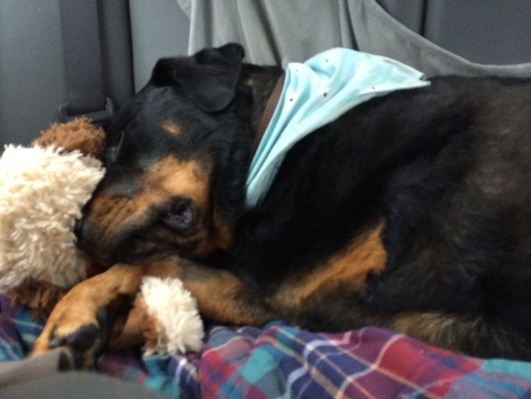 Snuggled up with Teddy, sleeping in the drive home.