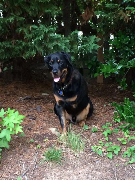 Handsome boy enjoy his backyard on this beautiful Friday morning!